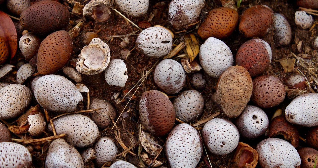 Repost: Mongongo Nuts, Elephants & Bush Biscotti – SavannaBel