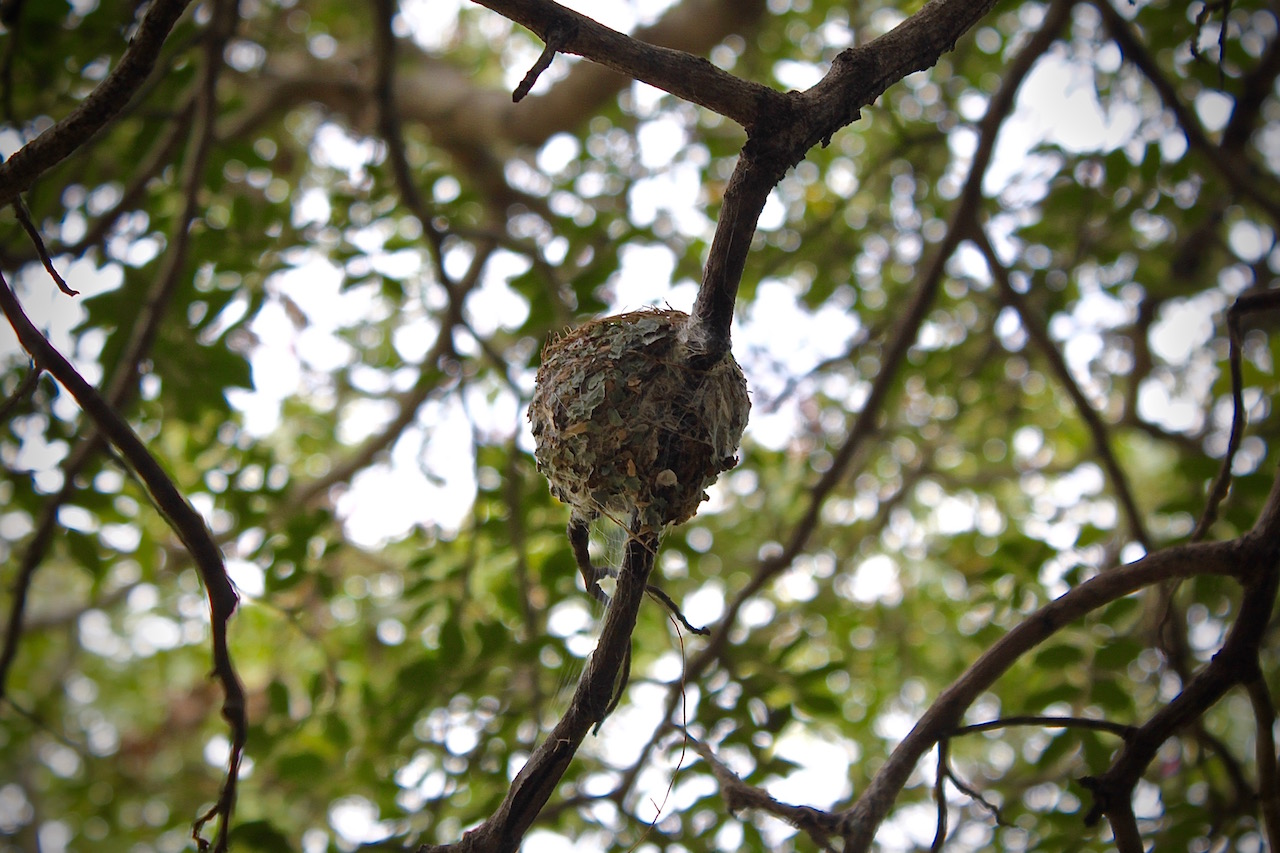 A flycatcher's perfectly-proportioned nest is ready for the egg-laying to begin.