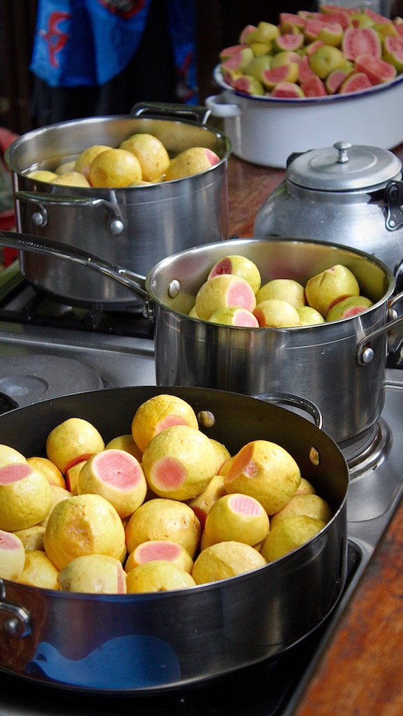 Pots and pots of guavas, all prepared to be turned into syrup and jelly.