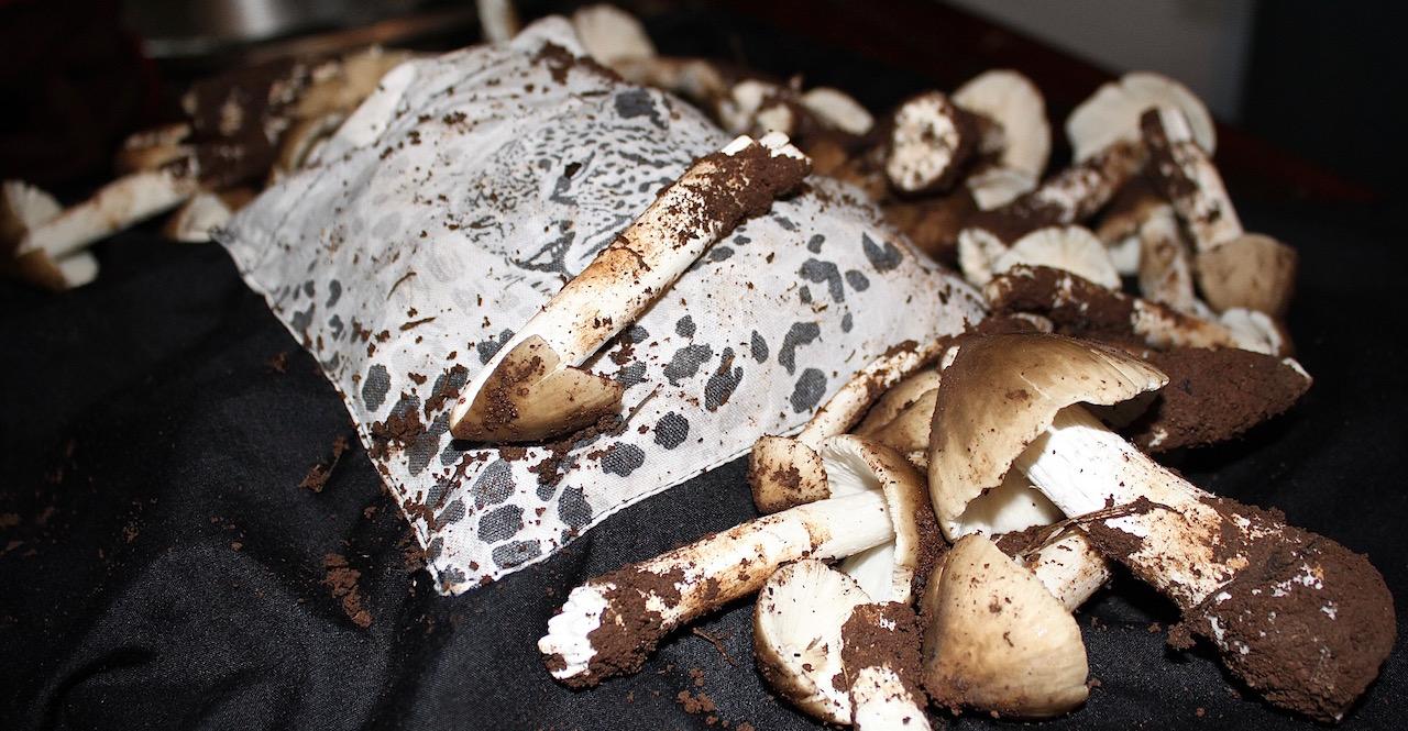 Kasumpa mushrooms (Tokaleya).