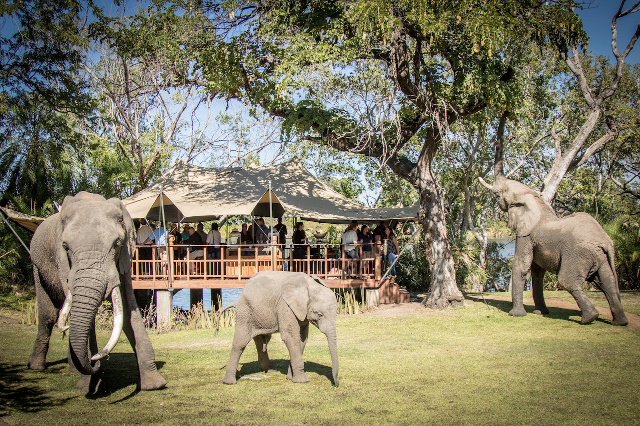 Our first (unofficial) lunch at The Elephant Café was held last week.