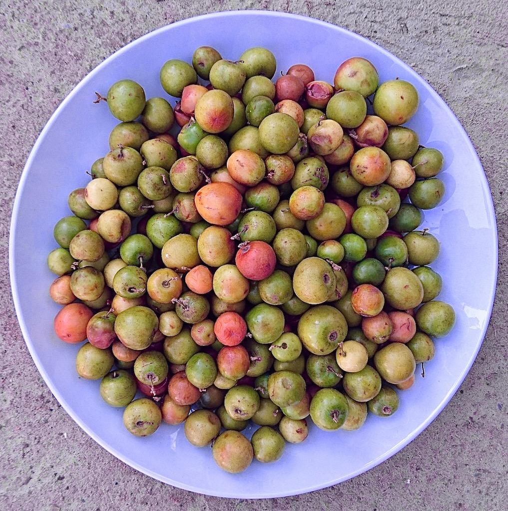 Masawa fruit, bought from Dambwa Market in Livingstone.