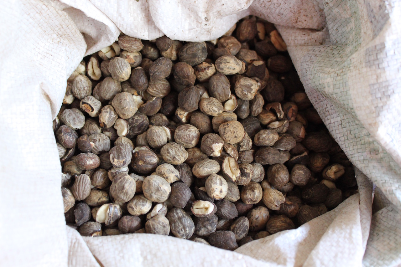 Mongongo nuts, after they have been removed from their rock-hard shells.